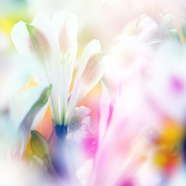 """Beautiful Flowers"" with blur."